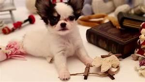 Ars Gratia Artis : pullip happy dog pang ju family ars gratia artis youtube ~ A.2002-acura-tl-radio.info Haus und Dekorationen