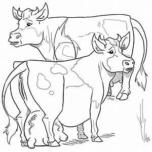 Cow Udder Drawing At Getdrawings