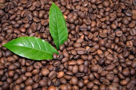 Coffee grounds can be an amazing free resource providing many benefits to your garden. Making Your Garden Beautiful With Used Coffee Grounds ...