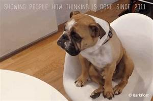 Boo The Dog GIFs - Find & Share on GIPHY