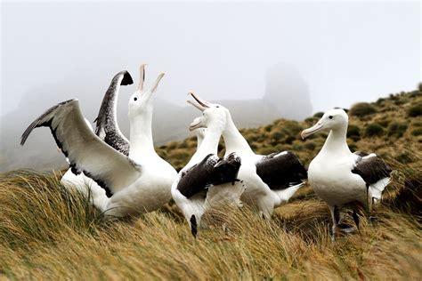 10 bizarre and beautiful bird courtship dances Beautiful