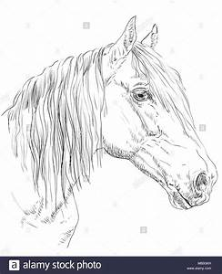 Pferdekopf Schwarz Weiß : orlow traber pferde portrait pferdekopf im profil in ~ Watch28wear.com Haus und Dekorationen