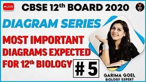 Biology Class 12 Important Diagrams 2020   Cbse   Part 5
