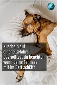 Im Bett Kuscheln : mit hund im bett kuscheln auf eigene gefahr hunde kuscheln ~ Watch28wear.com Haus und Dekorationen