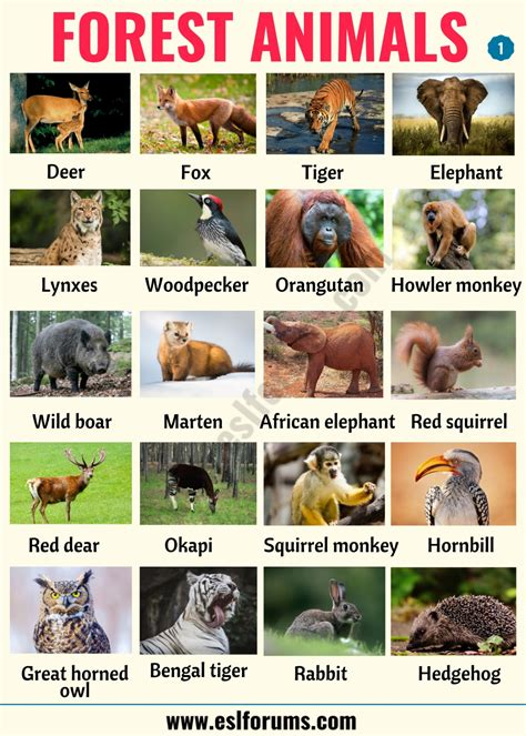 Forest Animals: List of Animals That Live in the Forest