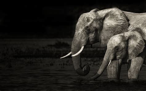 60+ Tribal Elephant Wallpapers on WallpaperPlay