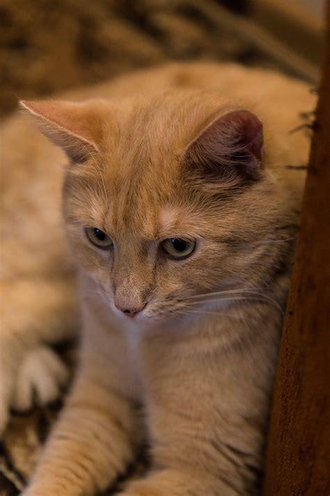 Kaķi - DACE