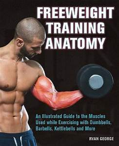 Freeweight Training Anatomy  An Illustrated Guide To The