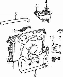Mercury Grand Marquis Radiator Coolant Hose  To 12  10  98