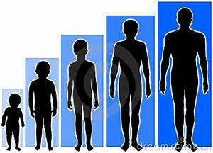 Stock Growth Chart Growth Stages Royalty Free Stock Image Image 972396