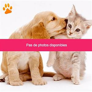 Je Donne Tout Gratuit : cherche chat a donner gratuit tout sur le chat ~ Gottalentnigeria.com Avis de Voitures