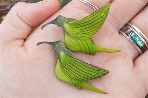 Burung cendrawasih ini merupakan burung yang langka. Gambar Burung Langka Dan Namanya - Gambar Burung