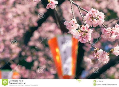 Pink Cherry BlossomCherry Blossom Japanese Flowering