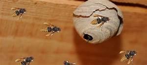 Kosten Wespennest Entfernen : wespennest entfernen motorradzubeh r einebinsenweisheit ~ Watch28wear.com Haus und Dekorationen