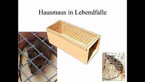 Lebendfalle Selber Bauen : lebendfalle youtube ~ A.2002-acura-tl-radio.info Haus und Dekorationen