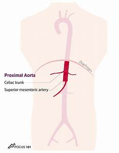 Aorta Ultrasound Made Easy  Step-by-step Guide