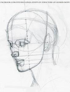 Head Anatomy Drawing At Getdrawings