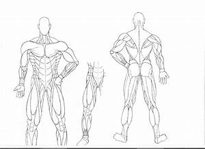 Human Body Anatomy Drawing At Getdrawings Com