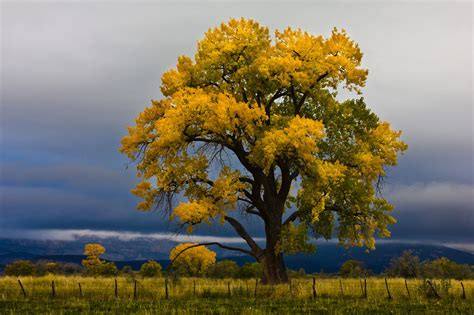 Found on Bing from miriadna com Tree photography Autumn
