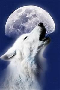 u-ne-ga-wa-ya(White Wolf) on Pinterest | White Wolves ...