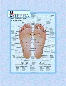 Doterra Foot Reflexology Chart  U0026 Oil Use Guide