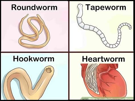 Viermi paraziti intestinali, Paraziți Intestinali - Cel ...