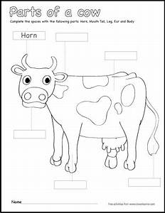 Label And Color The Parts Of A Cow