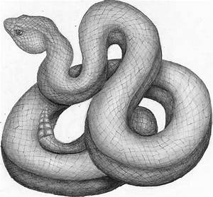 The gallery for --> Realistic Snake Sketch