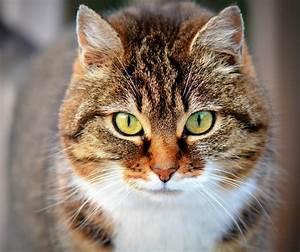 Katzen Fernhalten Von Möbeln : wie alt werden katzen wie alt ist meine katze ~ Sanjose-hotels-ca.com Haus und Dekorationen