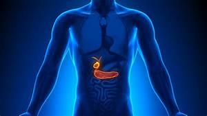 Gallbladder Function  Location  U0026 Anatomy