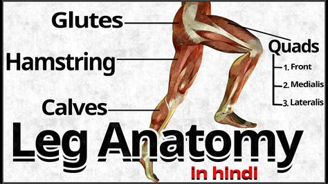 However, the muscle names often reflect something about their action, their shape, or their locations. Muscle Names / Muscles in the body — Science Learning Hub ...