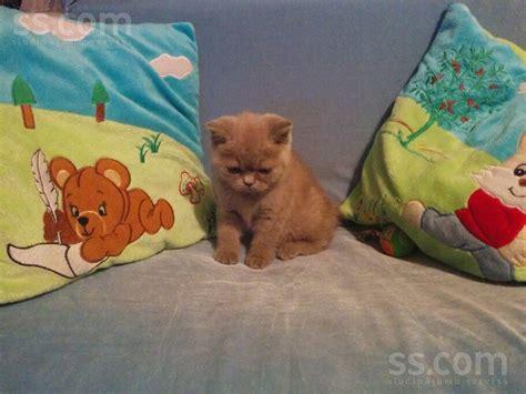 SS.COM Kaķi, kaķēni - Britu īsspalvainais, Cena 200 €. 3 ...