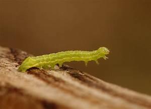 Small, Green, Caterpillar
