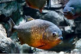 piranha solution msds ...