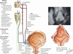 Renal And Genitourinary Problems