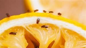 Fruchtfliegen Im Bad : wie sie k chensch dlinge loswerden ~ Lizthompson.info Haus und Dekorationen