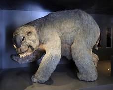 Diprotodon Diprotodon ...