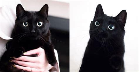 Последние твиты от 黑貓老師 (@kurtsunx). 超可愛黑貓IG網紅報到!顛覆你對黑就是不吉利的刻板印象 LI