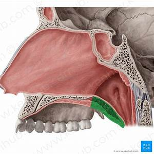 Anatomy Kenhub