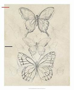 Vintage Butterfly Sketch Ii Giclee Print By June Erica