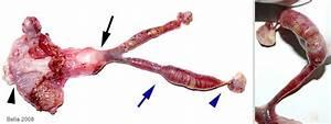 Sarcoma Figure 6  U2013 Rat Guide