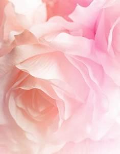 Le Mauve Se Marie Avec Quelle Couleur : la couleur mauve se marie avec quelle couleur beautiful peinture osez la couleur with la ~ Nature-et-papiers.com Idées de Décoration