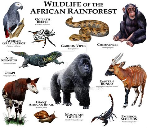 African Rainforest by rogerdhall on DeviantArt