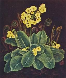 Blumen Gemälde In öl : galerie dethleffs fridel dethleffs edelmann gefundene ~ A.2002-acura-tl-radio.info Haus und Dekorationen