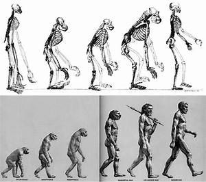 Evolution Isn U0026 39 T Progress