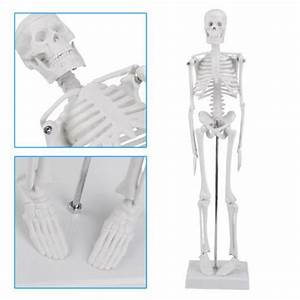 Us Human Anatomical Anatomy Skeleton Medical Stand Skull