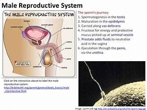 Reproduction  Core