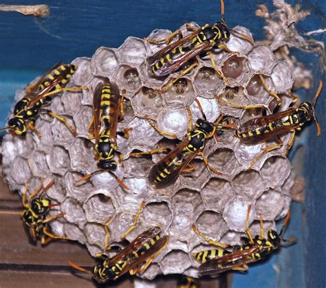 What Type of Bee's or Nests do we have? - Select Exterminating