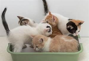 Enlever Odeur Urine Chien : neutraliseur d odeur urine de chat ~ Nature-et-papiers.com Idées de Décoration