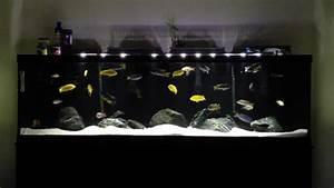 Fish Tank Background 125 Gallon African Cichlid Aquarium Youtube